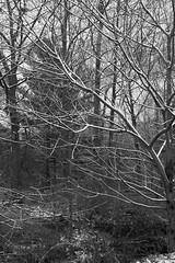 Trees after First Snow (jaybirding) Tags: leicavlux114 maine me outdoor scenery stormer yarmouth us
