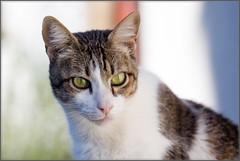 Bruno (No_Water) Tags: ebersbachanderfils badenwã¼rttemberg deutschland de bruno cat tiger tabby