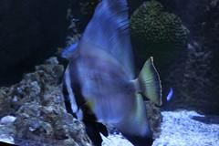 IMG_5710 (godpasta) Tags: newportaquarium kentucky newport aquarium