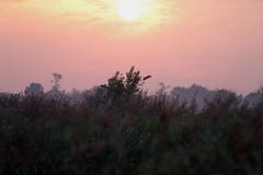 Hola mundo!   :)) (carlo612001) Tags: sole alba sunrise sun morning