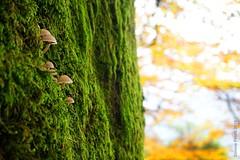 vertical habitat (simone.pelatti) Tags: forest chiusi dellaverna autumn mushrooms sonya6000