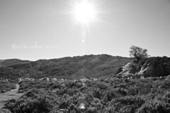 Arriver (cocciula) Tags: pradu pianoro supramonte oliena supramonteoliena trekking sardegna sardinia bw gregge capre sole calcare riti fame riconoscenza ovile bestiame