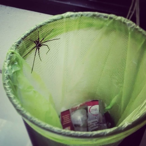 No God noooooooo O_O  #giant #spider #office #thailand