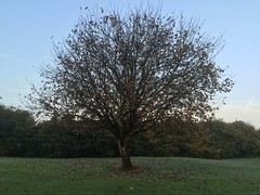 All Shook Up - The Fall - October 2016. (firehouse.ie) Tags: fauna flora midwest western clare ennis ireland field october 2016 autumn fall colors beauty nature bare trees tree