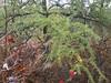 (Spathe Cloak) Tags: cooperriderkentbog tamarack larixlaricina