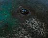Birds Eye View (gus.meredith) Tags: bridgetown canon7dii canon7dmk2 canon7dmark2 canon ef100400mmf4556lisiiusm australian australia birds naturalworld floraandfauna wildlife nature fauna westernaustralia perth