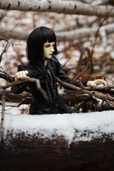 006 (Kumaguro) Tags: bjd dollshe husky dollshehusky dollsheoldhusky autumn earlywinter forest dark gothic