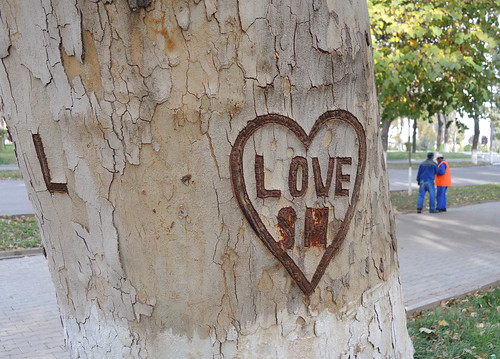 love on a tree
