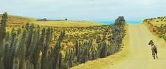 fray jorge 15 (Marce Lefort) Tags: horse chile road nature coquimbo beautiful cactus