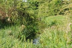 Stream (Lil Shepherd) Tags: landscape riverlea walthamabbey
