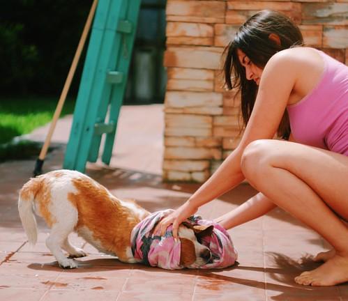 Hora del baño #beagle #bath #sun