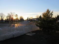 ** Mon coin de rue...au soleil couchant...** (Impatience_1) Tags: rue street coucherdesoleil sunset pin pine arbre tree clôture fence m impatience supershot coth coth5