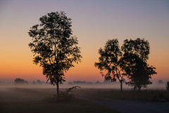 Misty morning (Infomastern) Tags: sdersltt animal countryside dawn dimma djur fog gryning landsbygd landscape landskap mist soluppgng sunrise exif:model=canoneos760d geocountry exif:isospeed=1600 camera:make=canon geocity camera:model=canoneos760d exif:focallength=60mm exif:aperture=50 geolocation exif:lens=efs18200mmf3556is geostate exif:make=canon