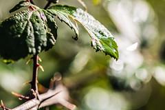 V Series - Drop (baris.lorenzo) Tags: blur focus sharp depthoffield canon contrast cold cloud sun shadow sunny fresh winter colorful colors colours camera light 105 macro macromondays sigma bokeh