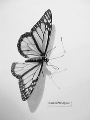 """""""The Great Escape"""" (bellydanser) Tags: art artwork fineart drawing graphite graphiteonpaper animal insect butterfly monarch shadow superrealism pencil"""