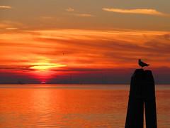 Atardecer (Edd Green) Tags: sunset atardecer italy italia venecia venice trip vacaciones edd green greenmasterx