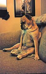 Miniature Bulldog Blues (Thought Knots Design) Tags: miniature bulldog bully bull dog dawg dogg doggy puppies puppy fat paw paws sit sitting human beach antigonish nova scotia canada strange breed mix mutt thought knots design