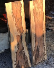 """First go with the Alaskan mill today. Nice boards cut with @treemanjoe #wardenstreecare <a style=""""margin-left:10px; font-size:0.8em;"""" href=""""http://www.flickr.com/photos/137723818@N08/31925279066/"""" target=""""_blank"""">@flickr</a>"""