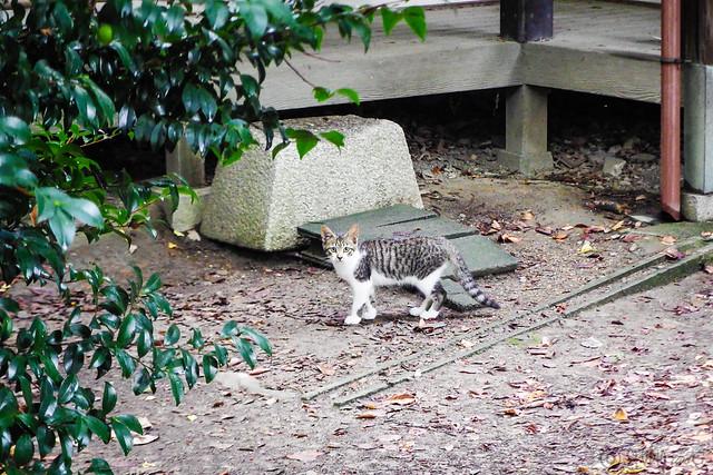 Today's Cat@2015-08-13