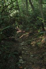shady path (Molly Des Jardin) Tags: park trees plants usa green rock stone forest rocks state pennsylvania earth path walk rocky dirt shade lancaster shady 2014 undergrowth susquehannock drumore 43215mm