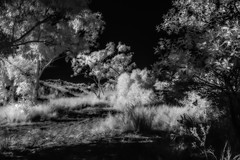 Light will disperse the darkness (erglis_m (Mick)) Tags: blackandwhite bw contrast canon landscape ir blackwhite interesting nt fineart highcontrast australia canoneos20d infrared australianlandscape northernterritory infraredfilter theoutback tanami tanamitrack tanamidesert