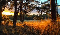 _MG_0049 lang de wildbaan (wjdweerdt) Tags: sunset sun nature set zonsondergang natuur veluwe landschap