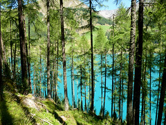 Bosco e lago -  Dolomiti 2015 (audiogab) Tags: snow mountains forest montagne lago neve hood fiori alto tyrol dolomiti bois sud bolzano bosco tirolo passo adige dolomiten dobbiaco abeti anterselva stalle