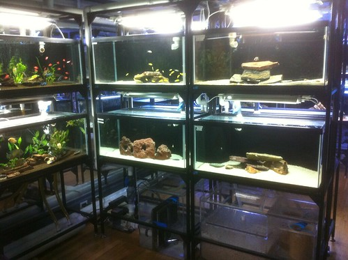 Custom Fish Systems - Fish Store - NYC - 8