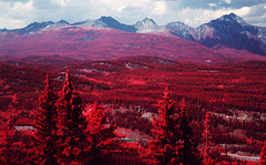 img022 (Photo Taker #9) Tags: infrared orangefilter colorinfraredfilm aerochrome