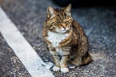 Cat (Rami Khanna-Prade) Tags: netherlands hotel schiphol paysbas ams eham aroport amsterdamairport amsterdamschipholairport luchthavenschiphol aroportdamsterdamschiphol ramikhannaprade
