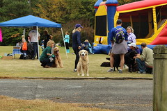 """Dogs, dog park, richmond • <a style=""""font-size:0.8em;"""" href=""""http://www.flickr.com/photos/31682982@N03/21901373844/"""" target=""""_blank"""">View on Flickr</a>"""