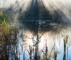Beams Of Light Through Morning Fog (Duncan Rawlinson - Duncan.co) Tags: trees reflection water fog sunrise reeds dawn sony transcanadahighway freshwater beamoflight beamsoflight rvtrip photobyduncanrawlinson httpduncanco duncanrawlinsonphotography sonya7rii a7rii sonyα7rii α7rii drivingacrosscanadaoctober2015inthervcanada takenwithsonya7rii takenwithsonyα7rii 1jcdnsepuoy7quoyugxcnhd9wsyhngtvyc