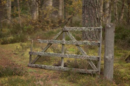 Lichens Gate