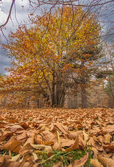 Autunno etneo (Flavia-cyb) Tags: autumn woods autunno etna catania bosco