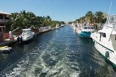 motoring (rovingmagpie) Tags: coral florida reef keylargo glassbottomboat johnpennekamp johnpennekampcoralreefstatepark reefmadness keylargoprincess sfi2015