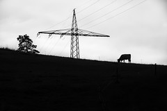 Fauna & industrialism...
