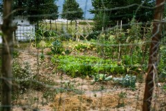 potager (Adeline Morel Photographie) Tags: potager jardin cultiver salades plantes nourriture main verte