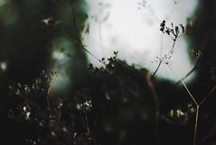 talvi (paperstorms) Tags: nature dark darkness eerie