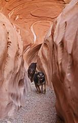 Biff & Frikka in Little Wild Horse Canyon (Bob Palin) Tags: 15fav usa dog animal 1025fav 510fav canon landscape utah sandstone hiking 100v10f biff sanrafaelswell catahoula emerycounty littlewildhorsecanyon club100 100vistas instantfave canonef24105mmf4lisusm ashotadayorso frikka orig:file=2015120703897