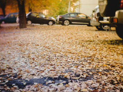 Cars love driving on dry leaves