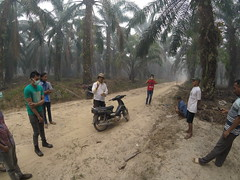 SNV and Prosympac visit Jambi, October 2015 (everyoneisgone) Tags: sumatra haze smoke farmer sustainable palmoil jambi aulia akvo snv smallholder auliarahman muarojambi akvoflow prosympac