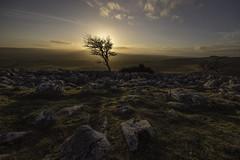 Setting sun (Malajusted1) Tags: sunset england tree yorkshire scales limestone ingleton ingleborough limestonepavement yorkshiredalesnationalpark twistleton twistletonscar larst