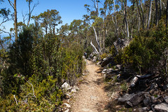 ZigZag Track, Mount Wellington
