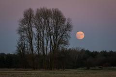 Moonrise.24.12.15 (deltic17) Tags: christmas xmas winter moon evening dusk christmaseve lunar
