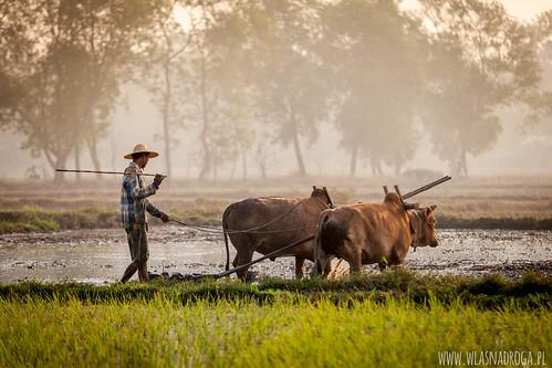 Wiejskie klimaty Birmy
