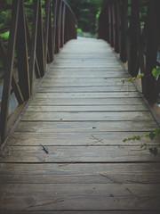 Lizard bridge (Vincent F Tsai) Tags: bridge walk scenery park lizard panasonic lumixg7 leicadgsummilux25mmf14 texture
