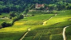 Vignoble d'Alsace (mamietherese1) Tags: hautrhin 68 world100f soe earthmarvels50earthfaves universeofphotography autofocus fabuleuse fleursetpaysages concordians