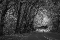 Tunnel of Trees (llabe) Tags: tunneloftrees blackandwhite monotone steilacoomblvd street road trees steilacoom washington nikon d750