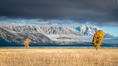 Teton Trees (Images by William Dore) Tags: landscape outdoors outside fall autumn autumnal trees nikon nikond810 d810 frost mist cloud mountains snow nationalpark wyoming grandtetonnationalpark