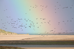 At the end of the Rainbow (Somerset Chris) Tags: rainbow birds canon